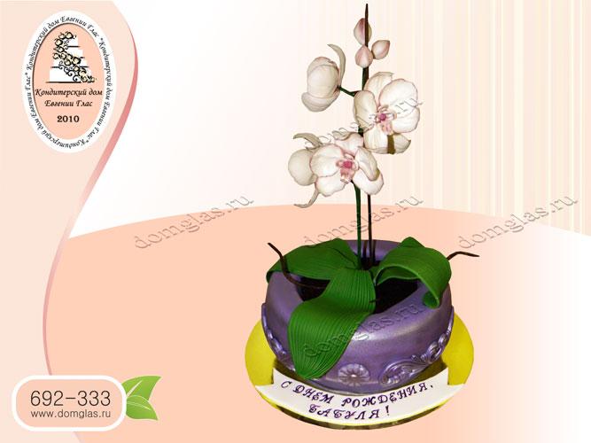 торт женский день рождения орхидея цветы горшок