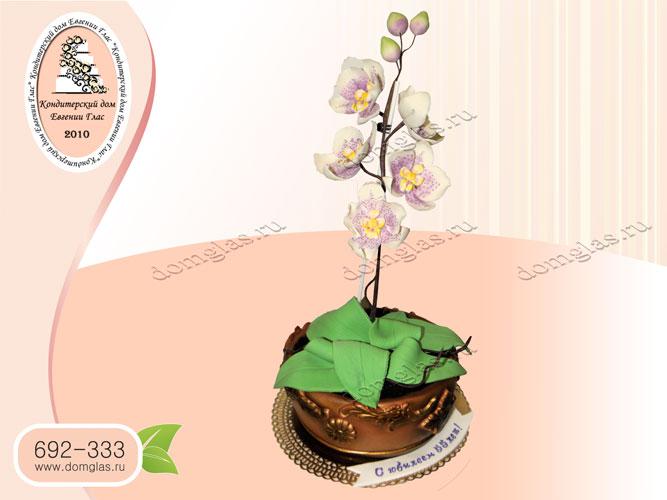торт женский цветок в горшке орхидея