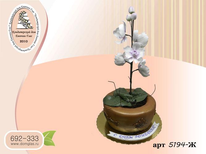 ж торт орхидея в горшке